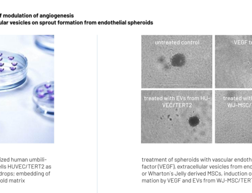 3D spheroid assay for screening of modulation of angiogenesis  monitoring the effect of extracellular vesicles on sprout formation from endothelial spheroids