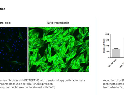 Study of myofibroblast differentiation