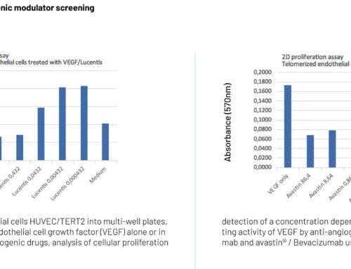 2D proliferation assay for angiogenic modulator screening